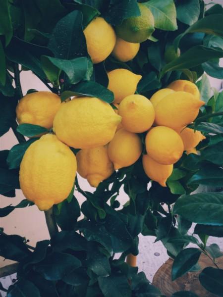 Rezept-Zitronenkuchen-glutenfrei